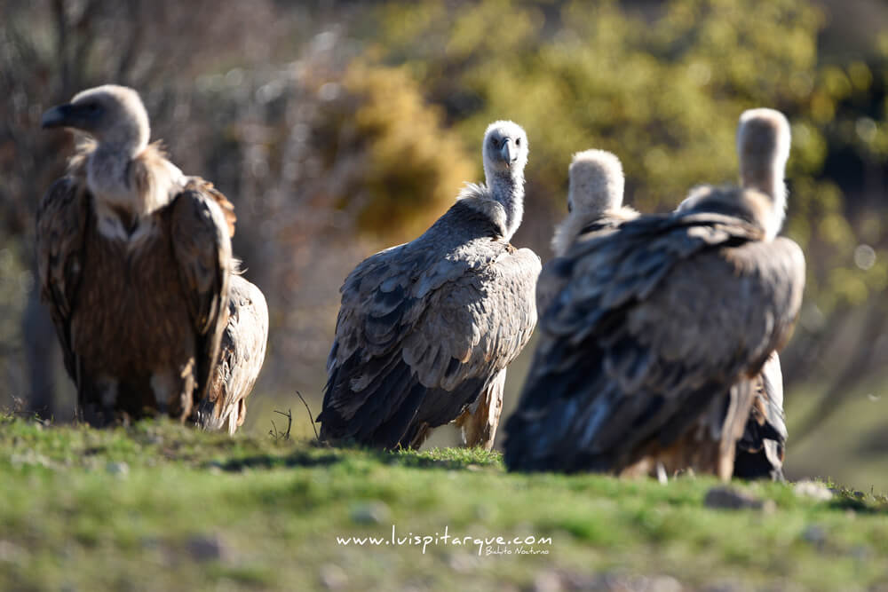 Primer premio en el safari fotográfico al Bajo Aragón 2018