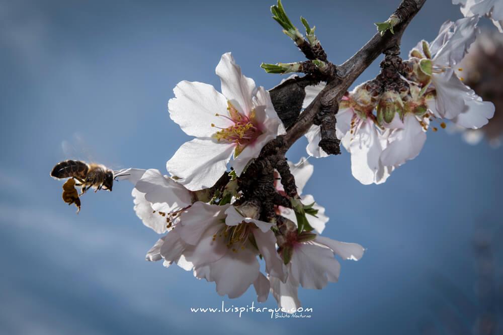 Rally fotográfico flor del almendro en Valdealgorfa