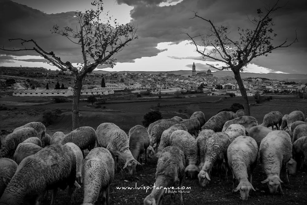 Pastoreando en Aguaviva.